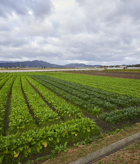 亀岡の肥沃な土壌