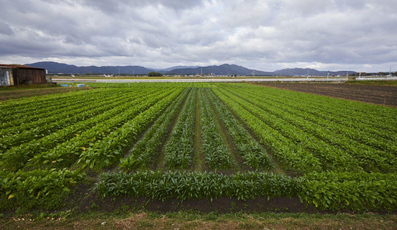 亀岡自社農場