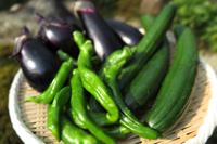 野菜の収穫!!