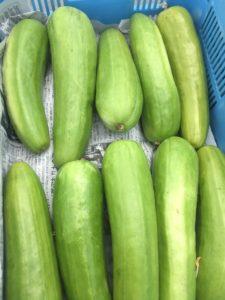 亀岡農場の夏野菜 6月 その3