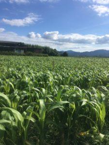 亀岡農場の畑