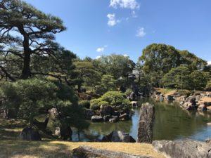 京都桜だより in二条城