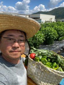 夏野菜の収穫です!!